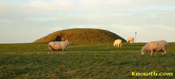 Sheep on Hill of Tara